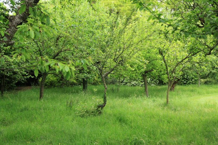 Adam Frost's orchard and meadow