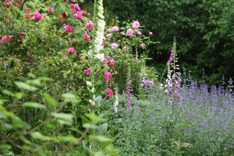 Roses and foxgloves at Adam Frost's home