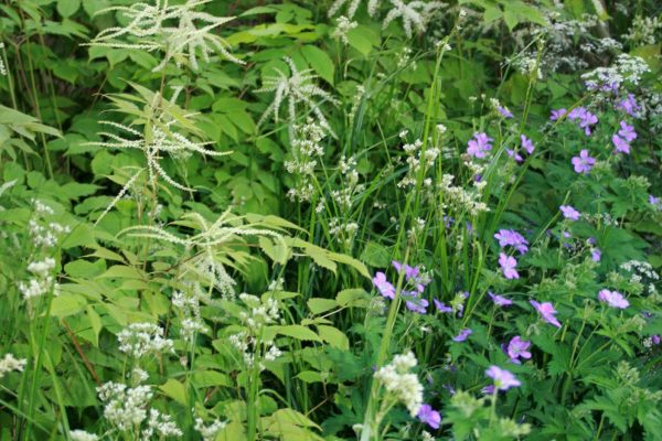 adam-frost-chelsea-flower-show-2012-planting