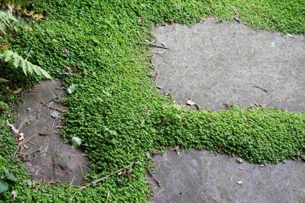adam-frost-garden-design-close-up