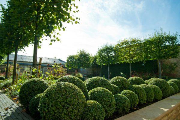 adam-frost-garden-rutland-box-balls