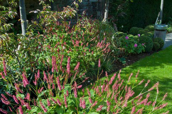 adam-frost-garden-rutland-planting