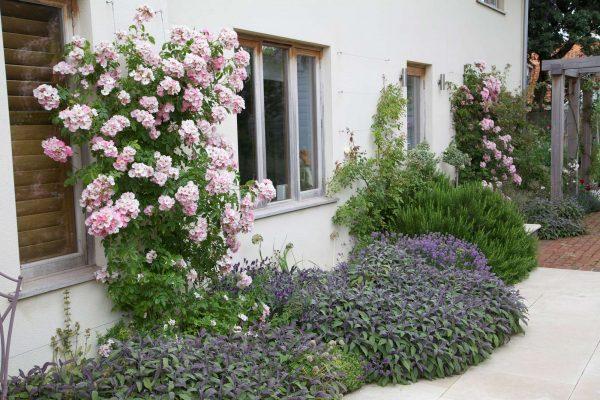adam-frost-norfolk-garden-03
