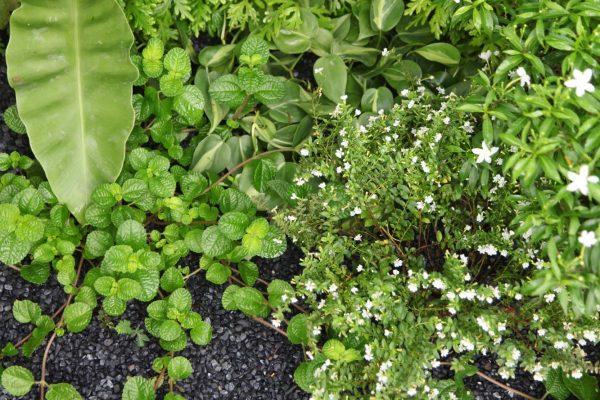 adam-frost-singapore-planting
