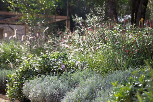 adam-frost-south-france-garden-02