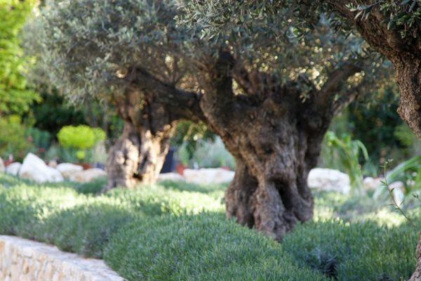 adam-frost-south-france-garden-06