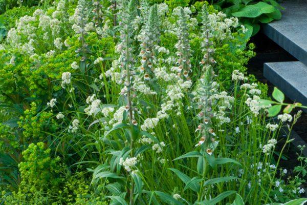 marianne-majerus-adam-frost-chelsea-2011-plants