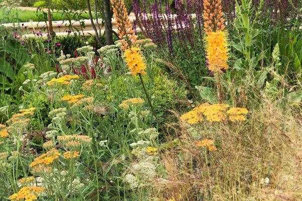 adam-frost-garden-design-lancashire-planting