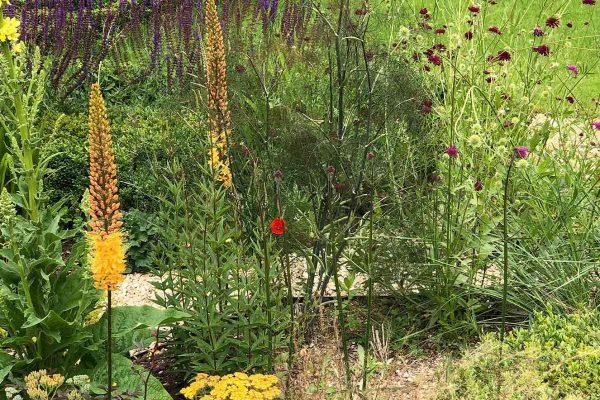adam-frost-garden-design-lancashire-planting-topiary